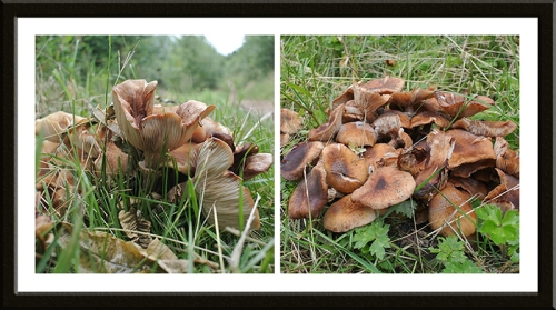 fungus