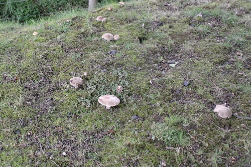 fungi on castleholm