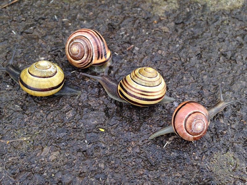Mario's snails