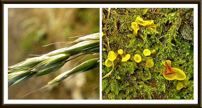 blade of grass and fungus