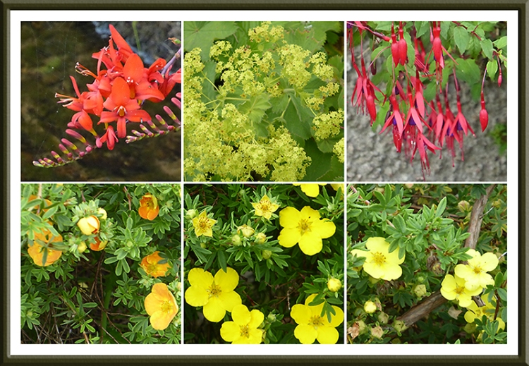 dam flowers