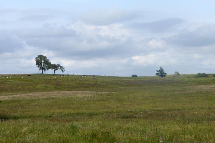 Rough pasture