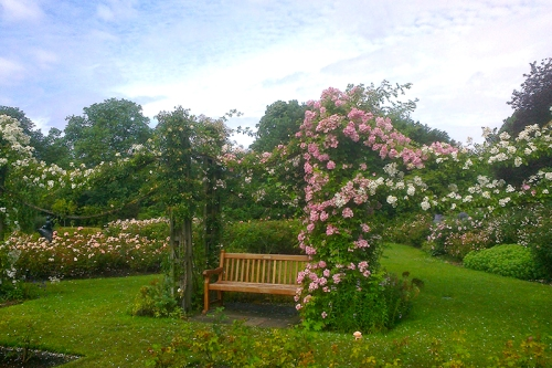 Climbing roses, Rose Garden, Regent's Park
