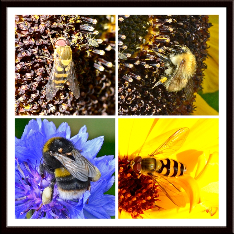 beees and hoverflies