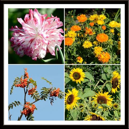 poppy, marigolds, rowan and sunflowers