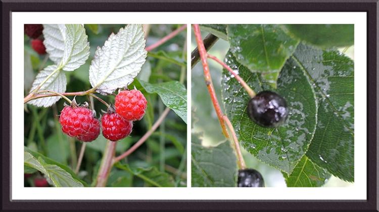 raspberries and tree berry