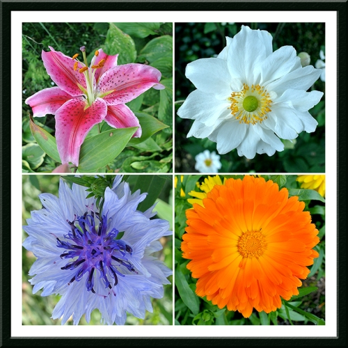 lily, anemone, cornflower and marigold