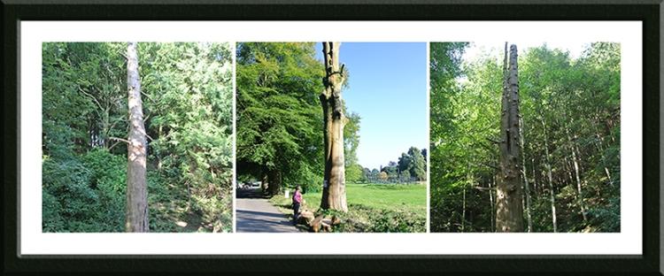 trees for fellin