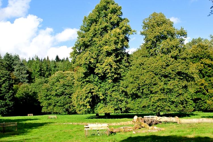 Felled tree on castleholm