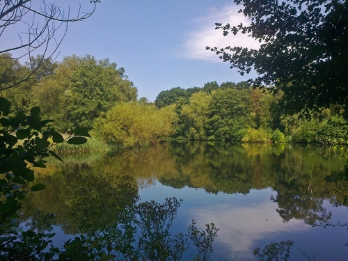 One of the ponds in Parliament Hill Fields