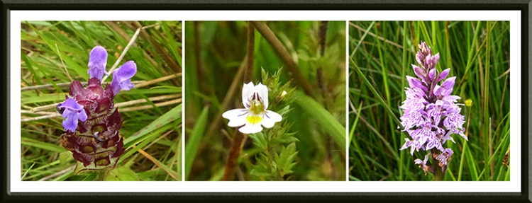 wild flowers at Lodgegill