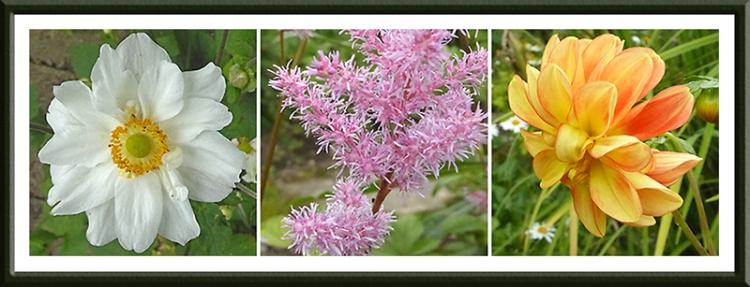 anemone, astilbe and dahlia