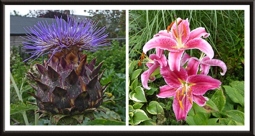 cardoon and lily