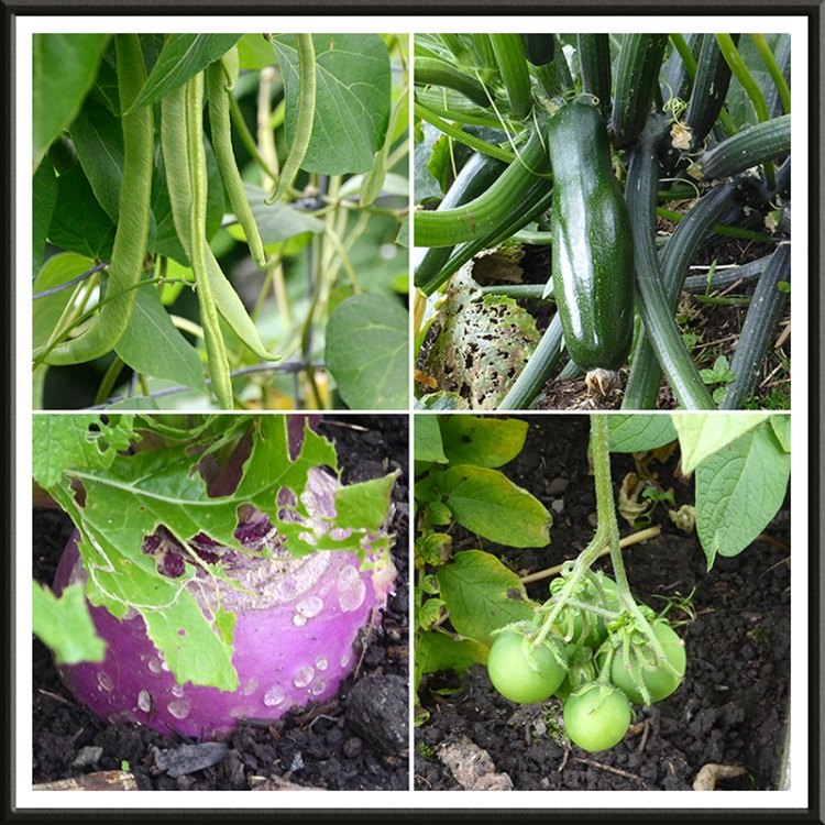 Beans, courgette, turnip and potato.