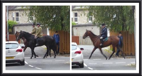 horses in Henry Street