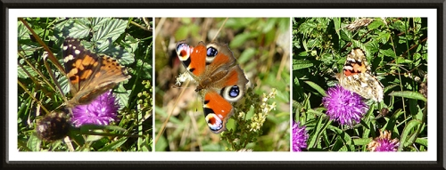 butterflies near dalston