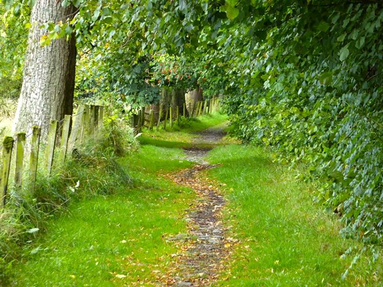 Pheasant hatchery path