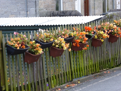 caroline Street flower baskets