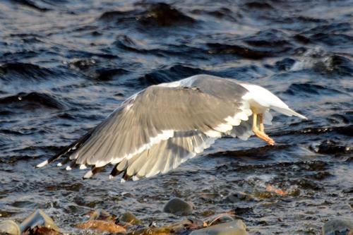 headless flying bird