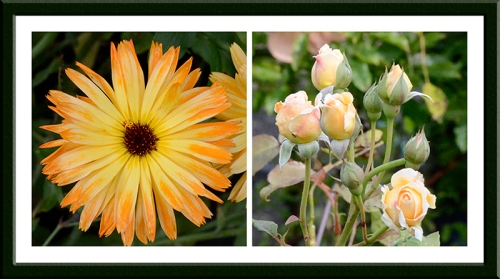 marigold and Crown Princess Margareta