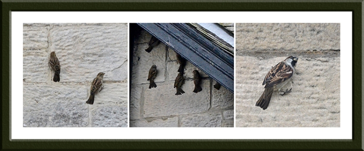 sparrows on wall