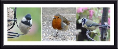 coal tit, robin and blue tit