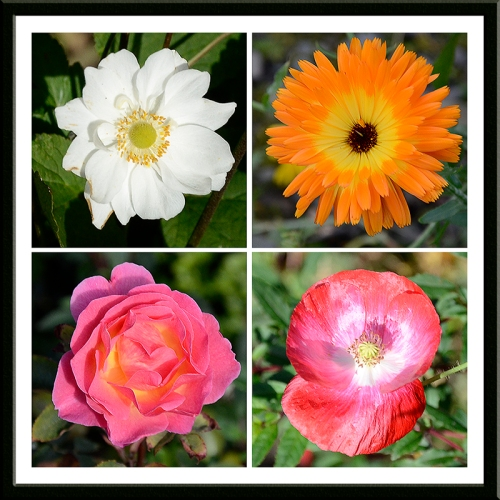 anemone, marigold, rose and poppy
