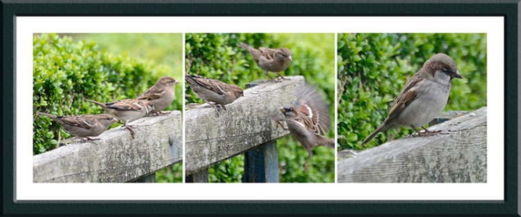 sparrows on bench