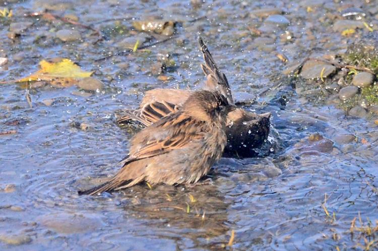 soggy sparrows