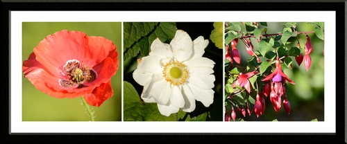 poppy, anemone and fuchsia