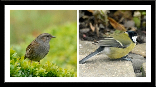 dunnock and great tit