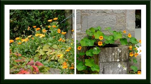 marigold and nasturtium