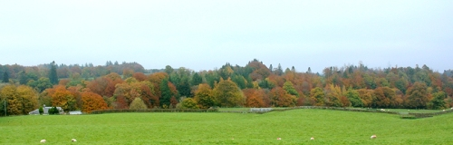 The trees beside the Esk on old A7