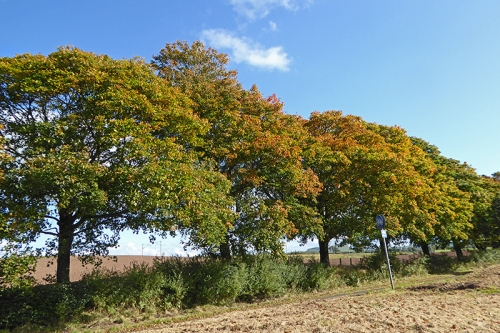 Autumn colour near Lockerbie