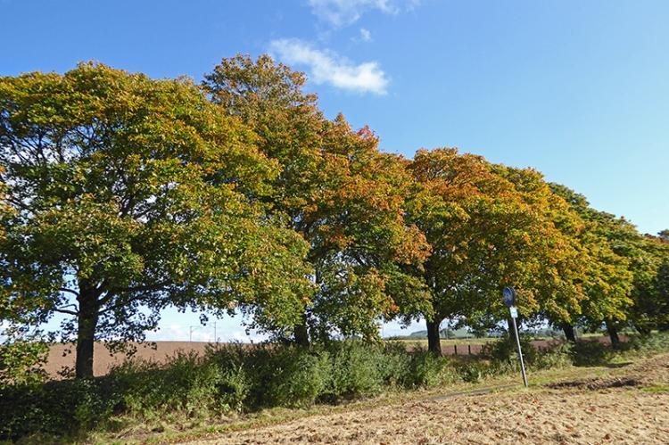 Autumn colour near Lockerbie