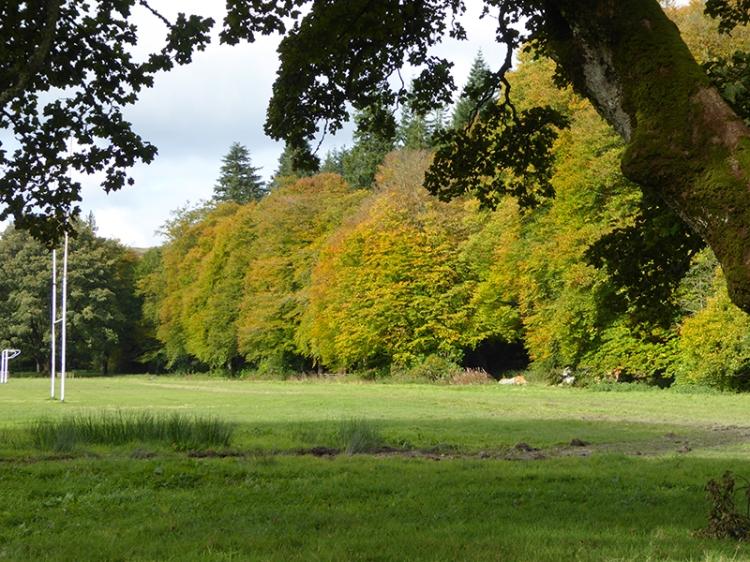 Trees on castleholm