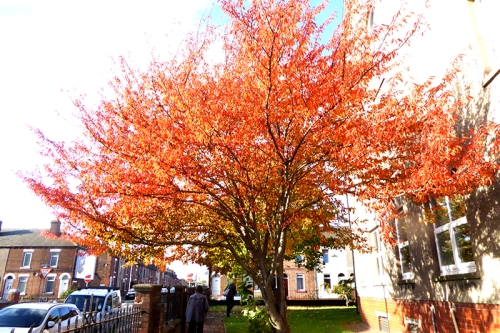 colourful tree at Trinity