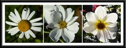 sun lit flowers