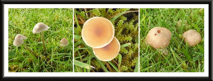 fungus at Byreburnfoot
