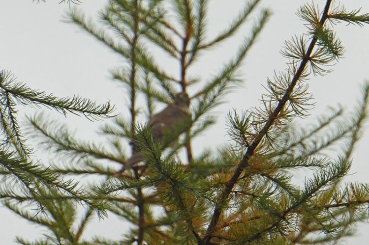 raptor in tree