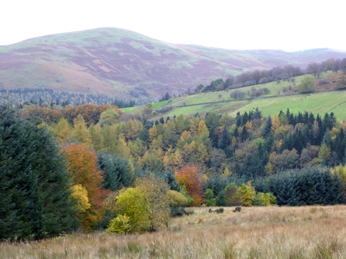Whitshiels view