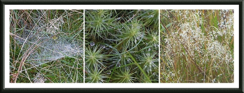 mosses and grasses