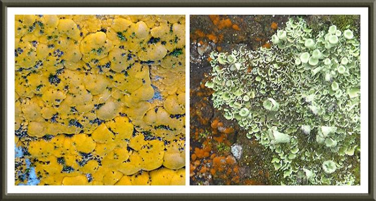 lichen on monument