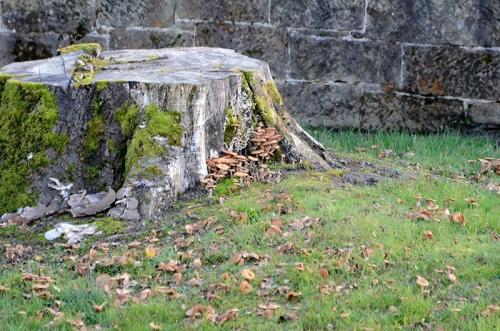 tree stump with fungus