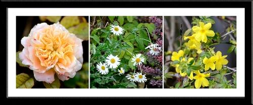 special grandma daisy and jasmine