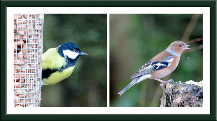great tit and chaffinch