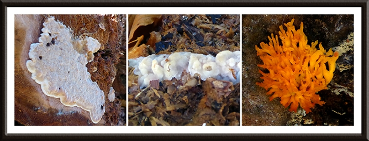 fungus and mold