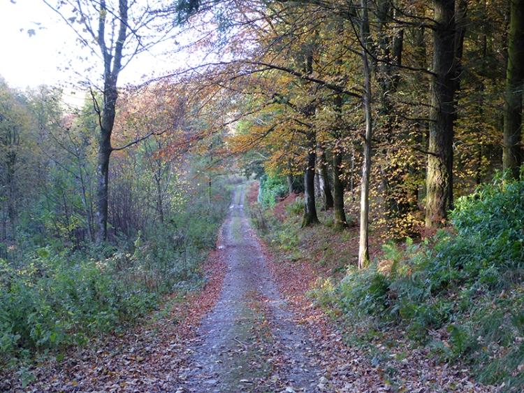 track to North Lodge