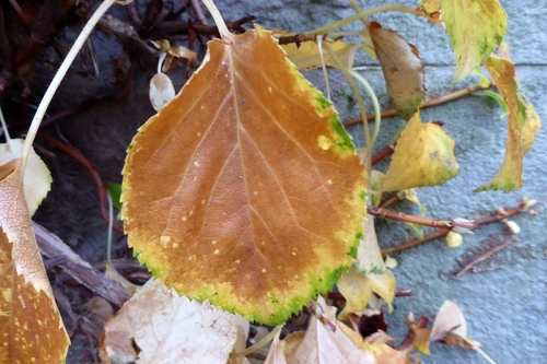 leaf of the day