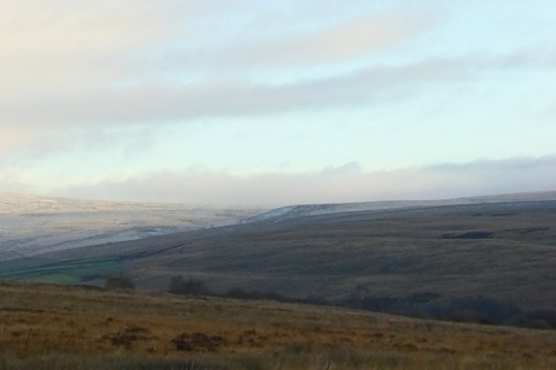 Moorland feeder view